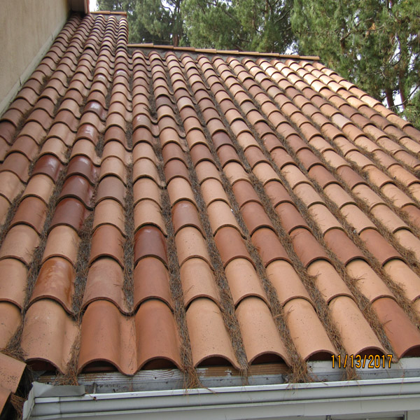 Roof & Rain Gutter Cleaning
